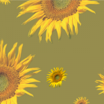 Sunflower Green